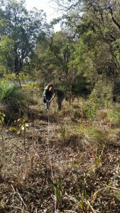 Officers from Landcare SJ and Shire of serpentine-Jarrahdale setting up quadrat at Duckpond Reserve, Mundijong, Western Australia