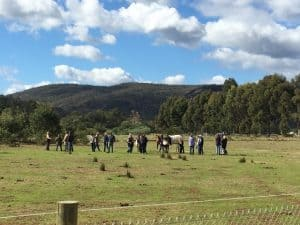 Equine property in Serpentine practising Sustainable Agriculture