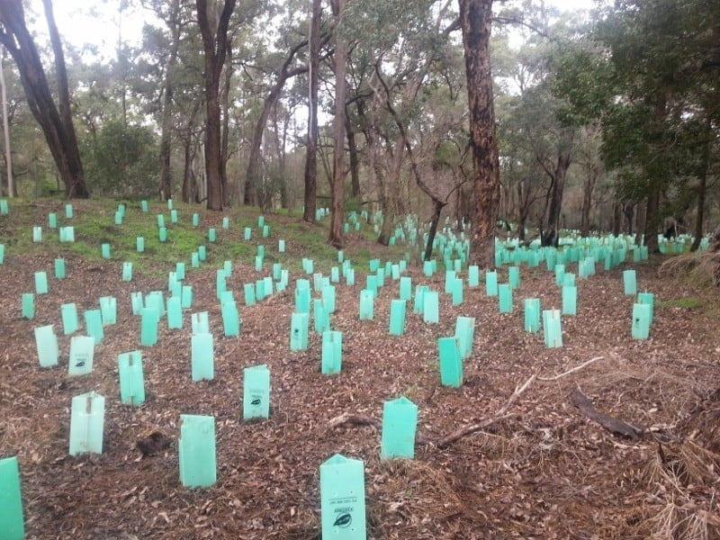 Federation Park Serpentine July 2014 after planting
