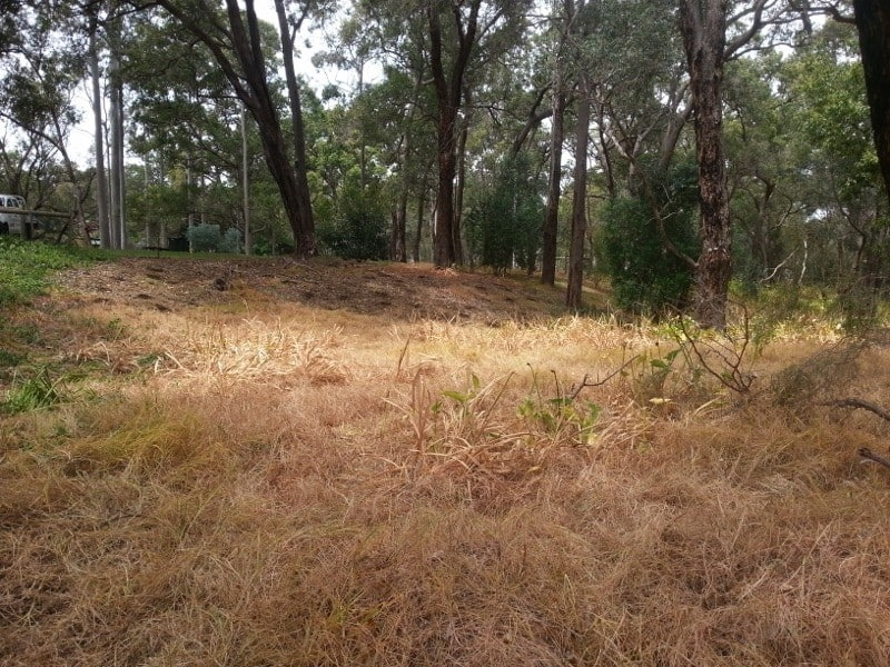 Federation Park Serpentine after weed control October 2013