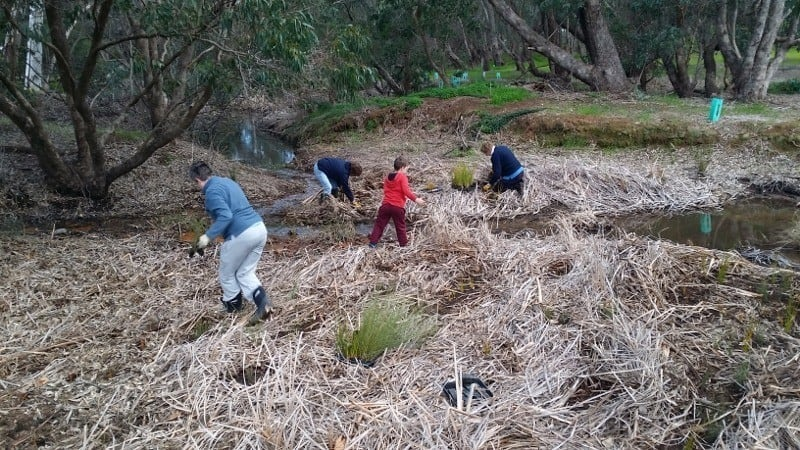 volunteers planting at Beenyup Brook, Western Australia 2016
