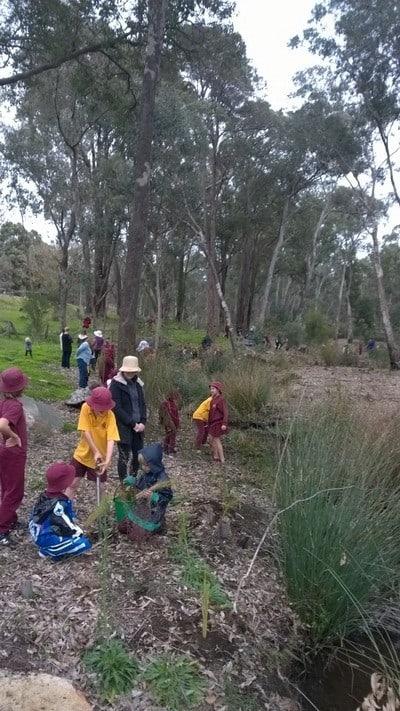 Jarrahdale School celebrates Schools' National Tree Day. Children planting seedlings at Gooralong Brook, Jarrahdale