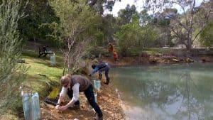 monks planting native sedges to create wetlands
