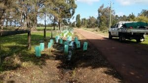 Planting  on verge of SW Highway North Dandalup