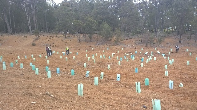 2-sj-shire_green-army-planting-in-jarrahdale-640x357