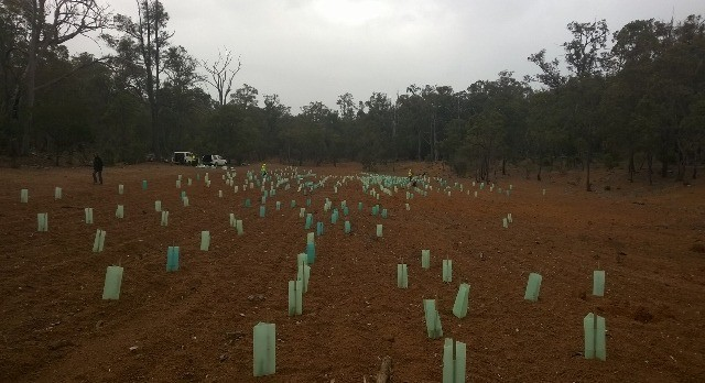 sj-shire_green-army-planting-in-jarrahdale-640x348