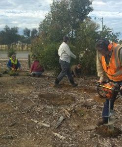 Landcare volunteers planting a road verge