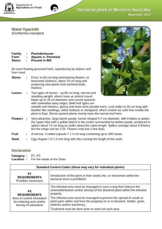 dafwa_info_water_hyacinth1
