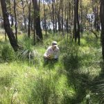 woman taking photos of weeds in bushland