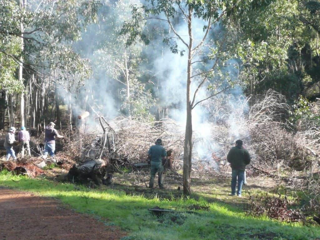 gooralong-brook-jarrahdale-heritage-society-burning-black-wattle
