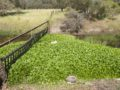 Aquila project to help detect water hyacinth on the Serpentine river – the time has come for your assistance!