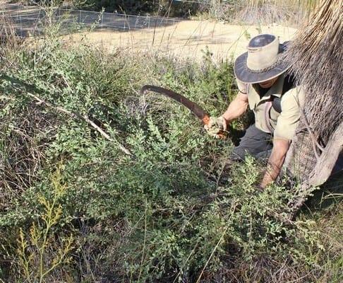 Friends of Brickwood Reserve removing tea trees