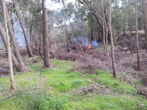 Burning off of black wattle weeds at Goorolong Brook