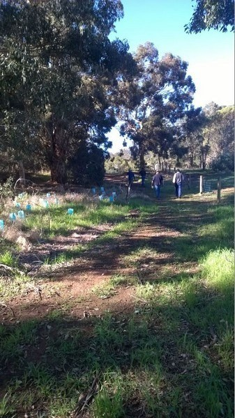 Volunteers planting at Myara Brook