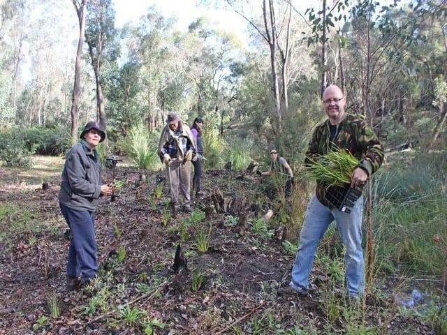 volunteers planting seedlings at Gooralong Brook, Jarrahdale
