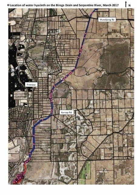 Aerial mud map of the Water Hyacinth in the Birega Drain