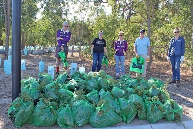 Members of Byford Enviro-link and Landcare SJ officer Kristy Gregory with 37 bags of stink weed collected at Byford Scout Reserve