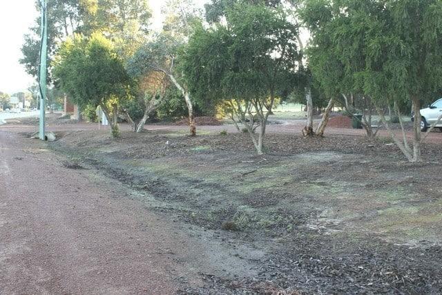 Byford Information bay trees