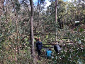 people planting at Gooralong Brook, Jarrahdale