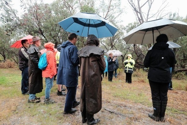 people standing in bushland