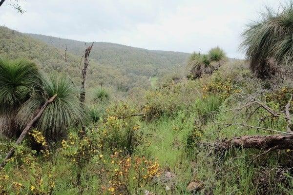 Keysbrook bushland