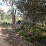 Spraying phosphide on to control dieback