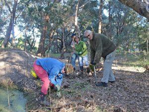 volunteers planting sedges in Old Brickworks Reserve