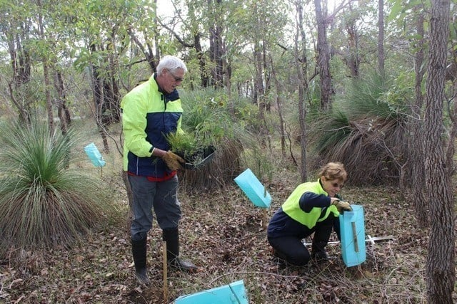 Two members of Byford Enviro-link removing plant gurds at Mundijong Road