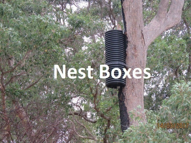 artificial nest box for black cockatoo in tree