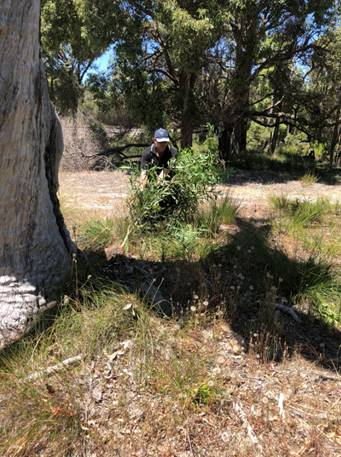 a man weeding rail reserve in Serpentine Jarrahdale