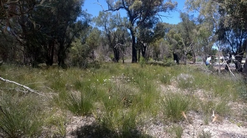 bushland next to rail line Mundijong