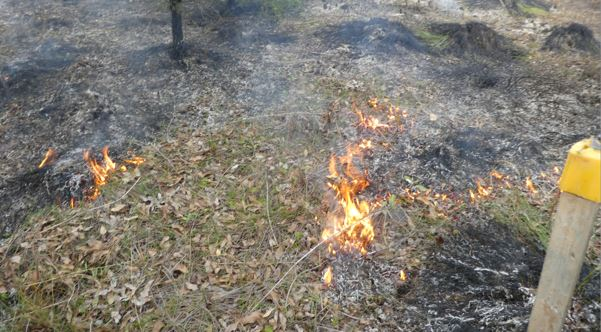 weeds burning on rail reserve