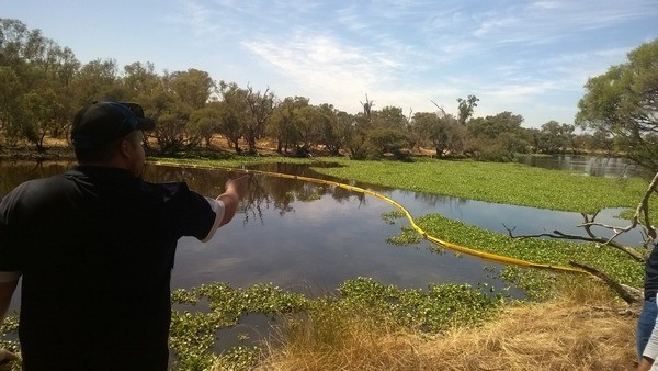 boom across Sepentine river to control the movement of the water hyacinth