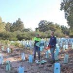 environmental volunteers inplanted paddock collecting tree guards