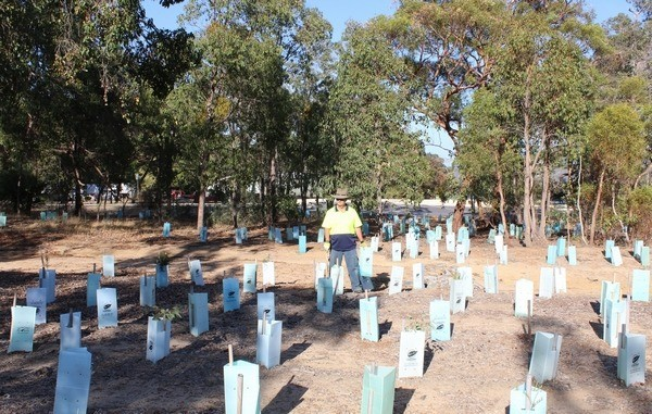 man standing amongst seedlings at Byford Scout Hut