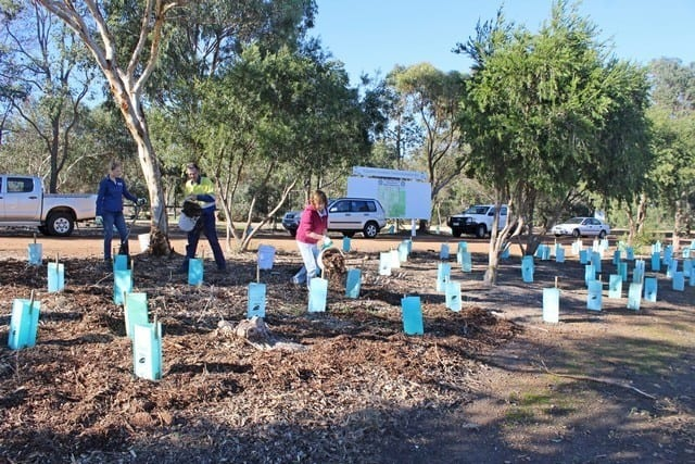 three women planting seedings at the Information Bay, Byford WA