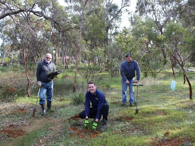 three men planting seedlings in bushland