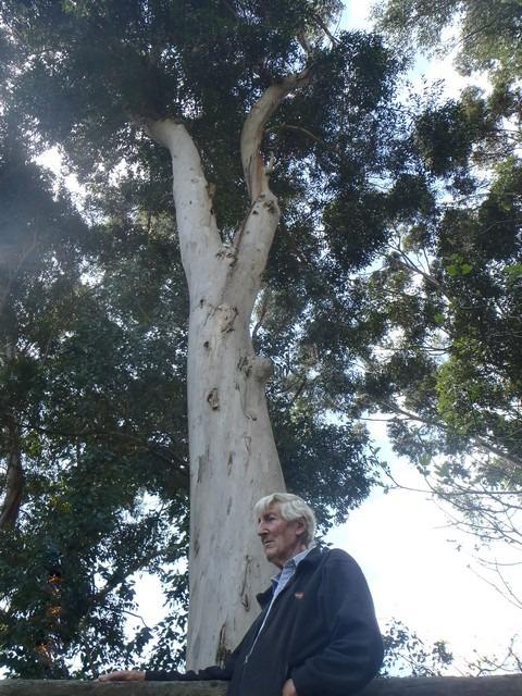 man standing in front of karri tree