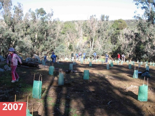people planting seedlings at Korribingal Brook