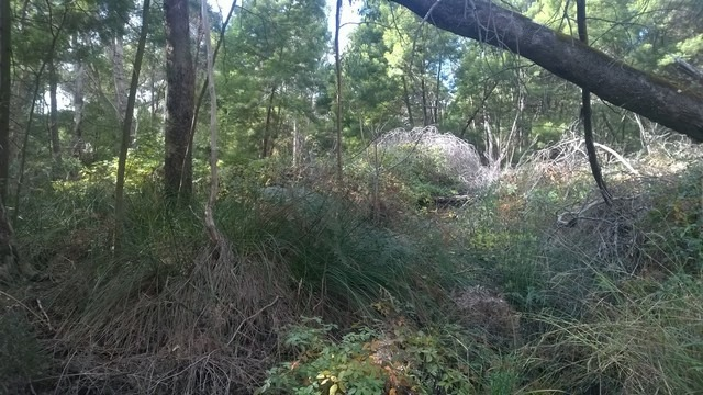 bushland infested with weeds