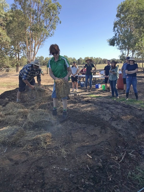 people watching women mixing horse manure with hay in a paddock