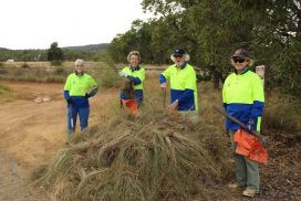 tree women and one man , volunteers standing behind a pile of lovegrass on Soliers Road, Byford