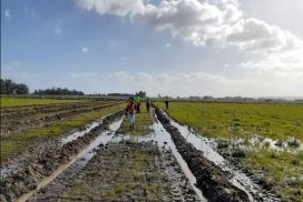 Several people planting into wet ripped paddocks in Serpentine Jarrahdale, Western Australia
