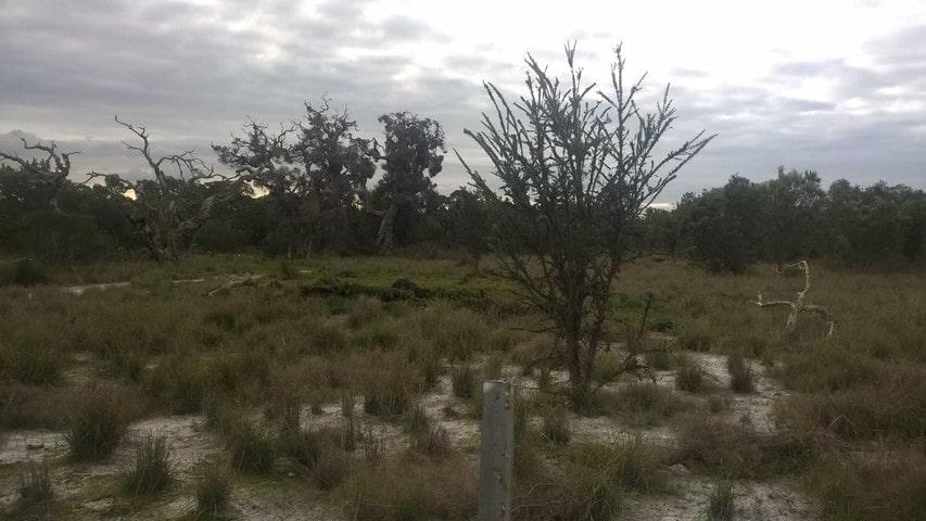 degraded bushland in Oakford WA